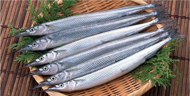 春の魚「サヨリ」/ 美しさと味を備えた才色兼備の魚