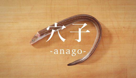 今が旬!アナゴの捌き方と調理 How to fillet & cook conger eel