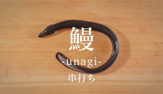 鰻(うなぎ)のさばき方:串打ち - How to filet Japanese Eel ver. Kushi-uchi -