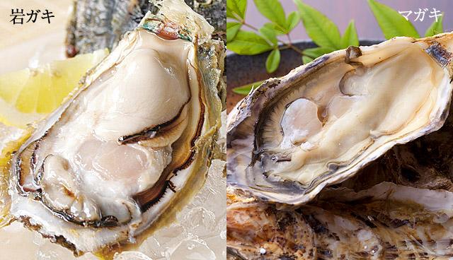牡蠣の【旬】っていつ?真牡蠣と岩牡蠣の違い