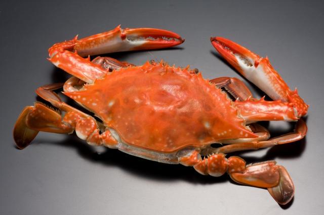 日本で蟹を食べ始めたのはいつ頃?【食用蟹の歴史】