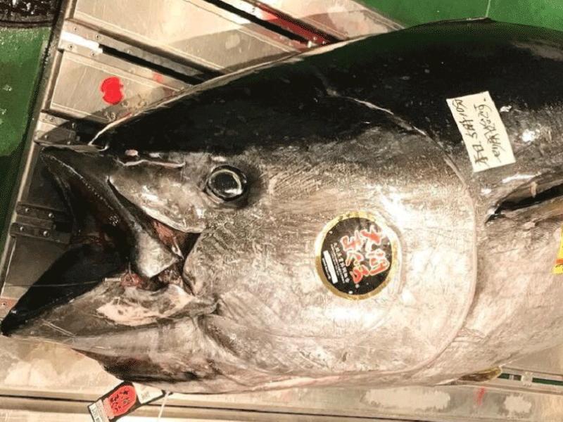 マグロ2019年初セリ |旅する鮨職人、ヨシさんが語る 「鮨の心」