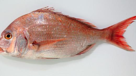 知っておきたい!豊洲市場の達人が教える「旨い魚」の見極め方(丸魚、サク、切り身)