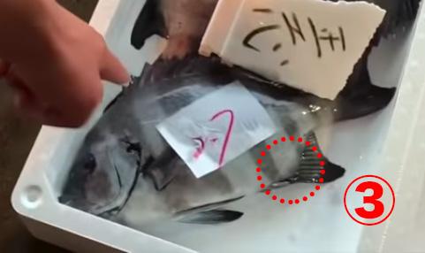 長谷川水産・津本氏が教える「こんな魚に騙されるな」