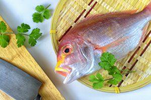 その季節にいただきたい旬の鮨ダネ「春の魚介を知る」