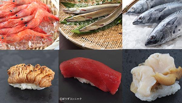 江戸前のネタは今が旬!鮨ネタランキング10月編 -SUSHI TIMES ORIGINALS-